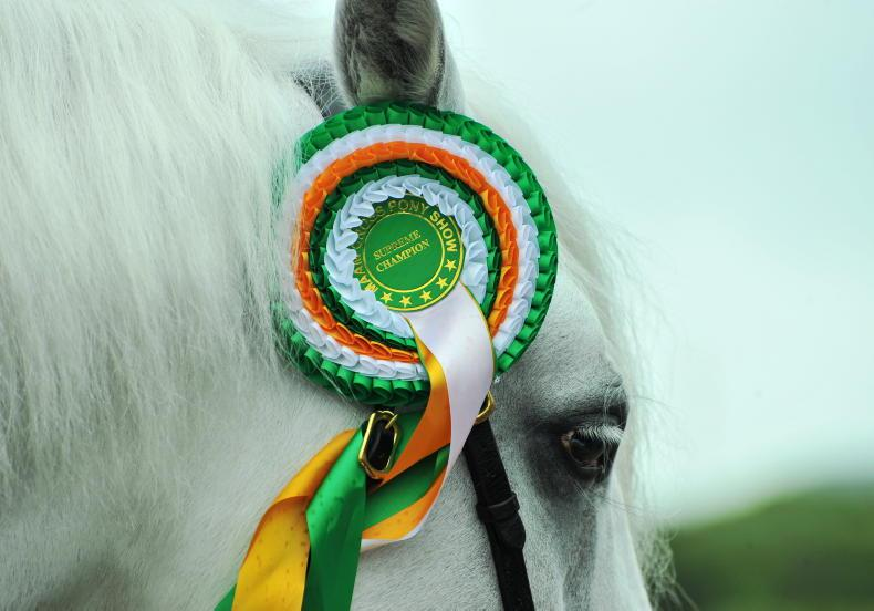 PONY TALES: Get snapping for Teagasc photo competition