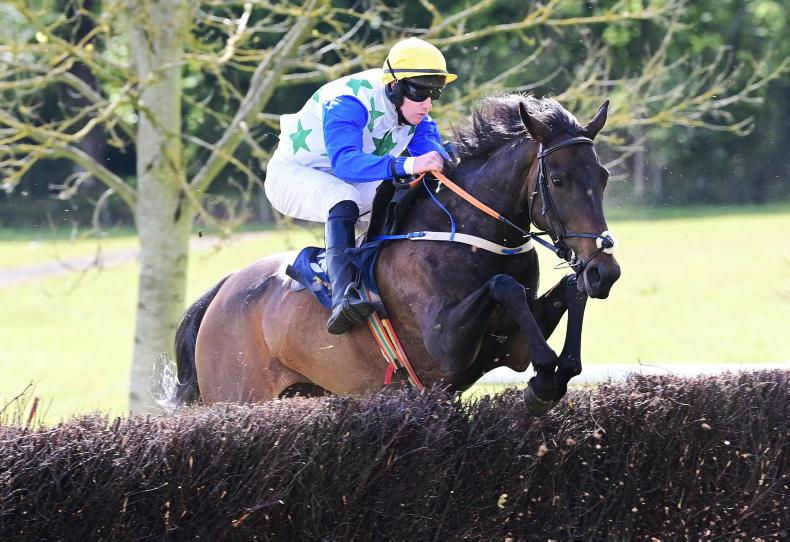 POINT-TO-POINTS: Stradbally Sunday: Pearless points Harney to first double