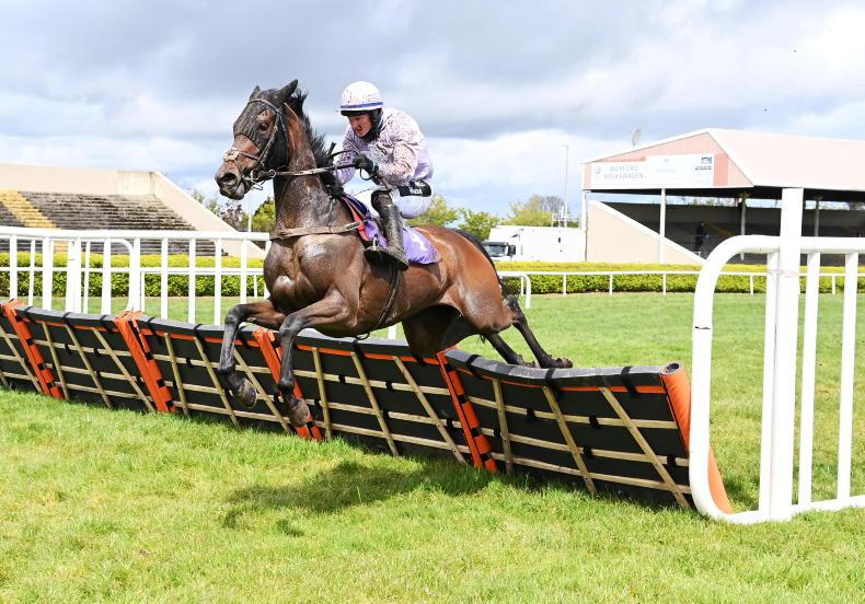WEXFORD SUNDAY: Magnor wins with Glory for Walsh family