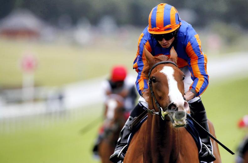 Love headlines Tattersalls Gold Cup possibles