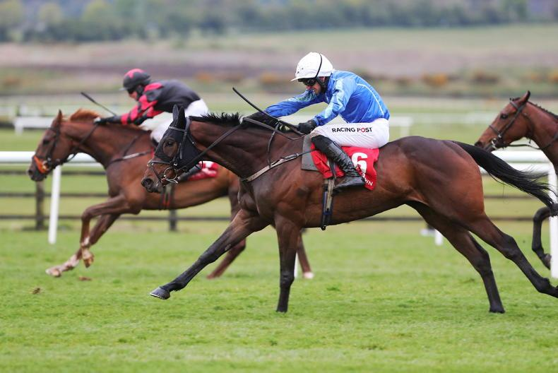 SALES: Punchestown runner-up selling online