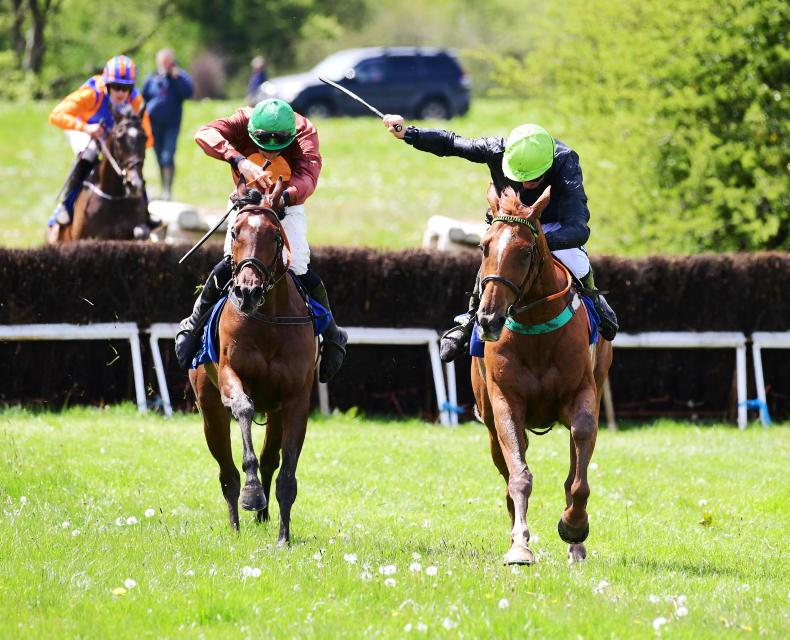 SALES: Winning pointers and bumper horses on offer