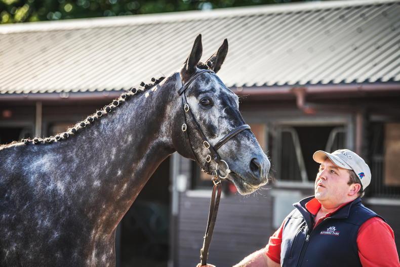 SALES: Gordon Elliott to train £195,000 sale-topper
