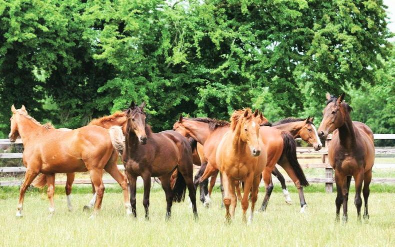 HORSE SENSE: Building resilience in horses and humans