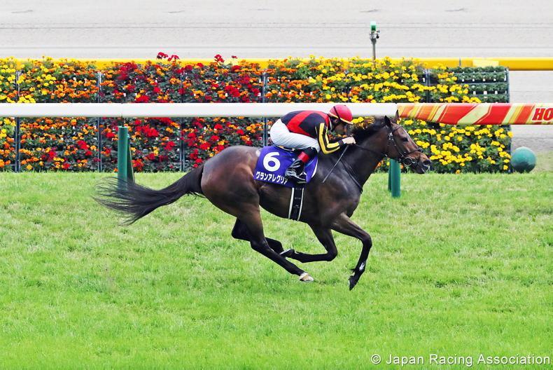 JAPAN: Gran Alegria makes Deep Impact in Victoria Mile