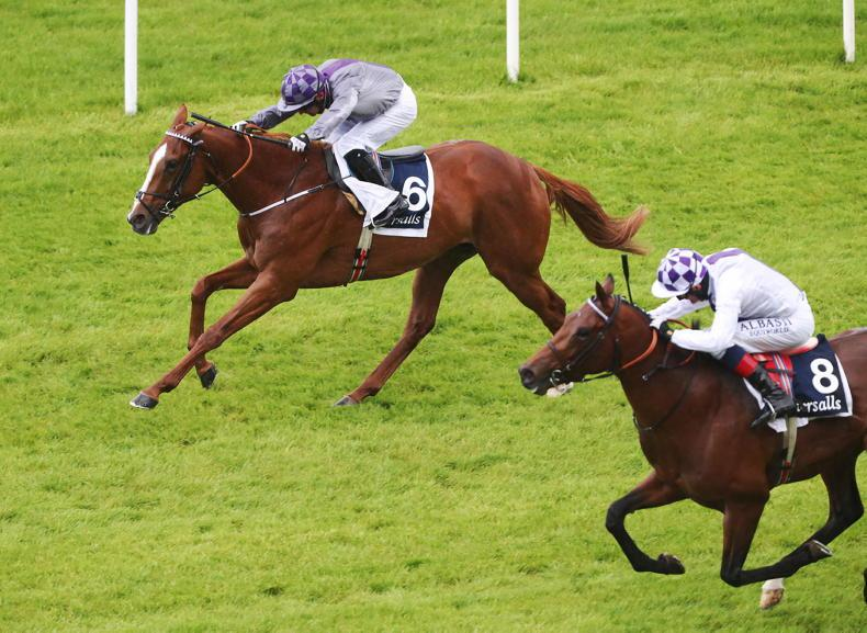 TIME WILL TELL: Mac Swiney earns his Guineas honours