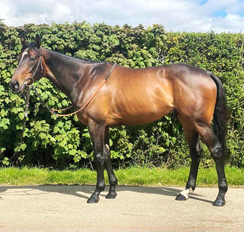 TATTERSALLS ONLINE SALE: Classical Wave provokes international competition