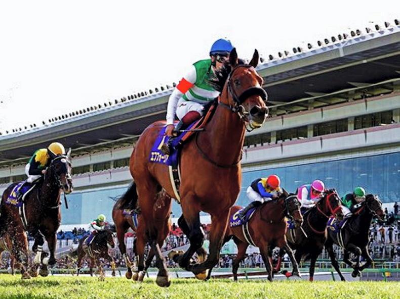 JAPAN: Efforia Derby favourite to maintain unbeaten record