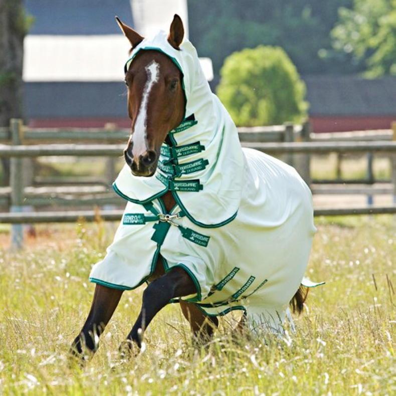 HORSE SENSE: Summer checklist for a healthy horse