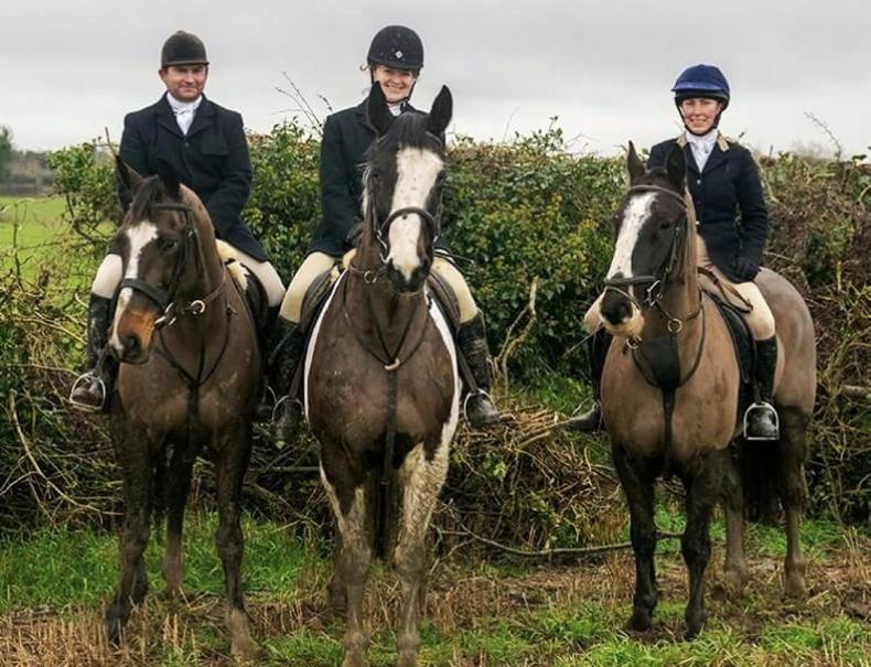 UCD researchers calling on horse owners to take sport horse health survey