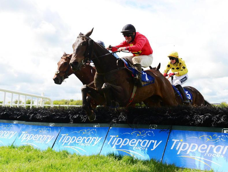 TIPPERARY TUESDAY: Nelson's Point finds his form