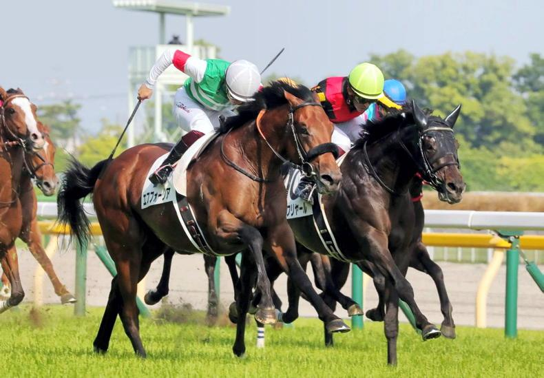 BREEDING INSIGHTS: Performance matters most for Japanese breeders