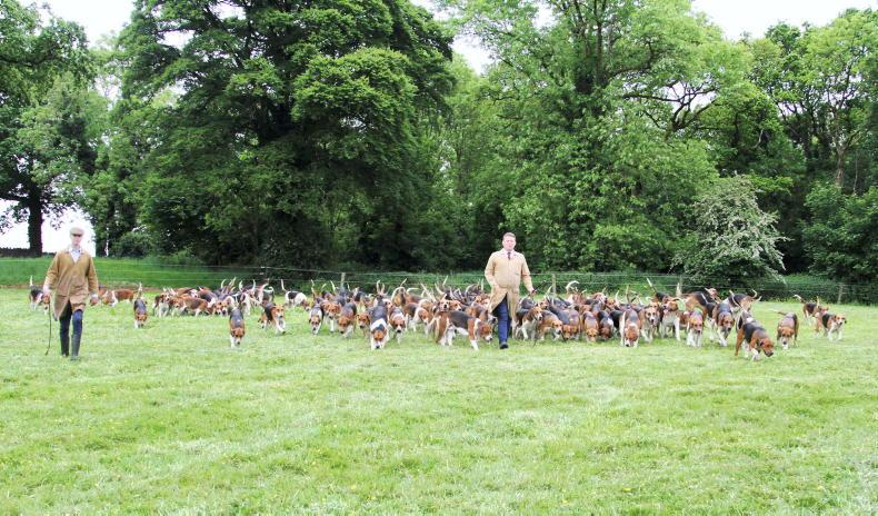 HUNTING KENNELS VISIT: Looking a picture in the park!