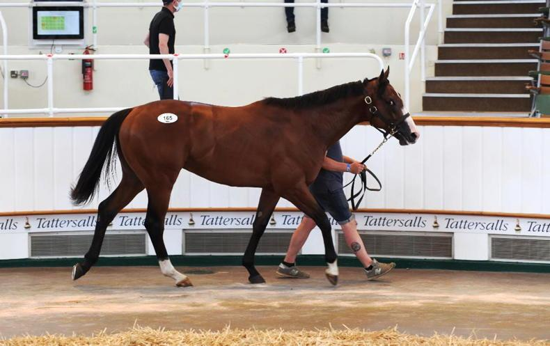 VIDEO: €6,000 yearling sells for £410,000