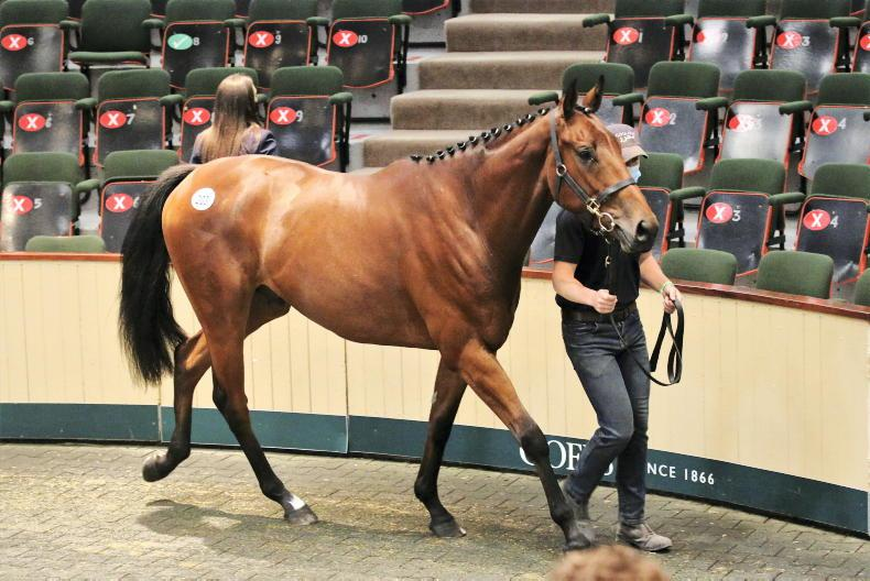 SALES: Bective Stud pays €230,000 for sale-topper