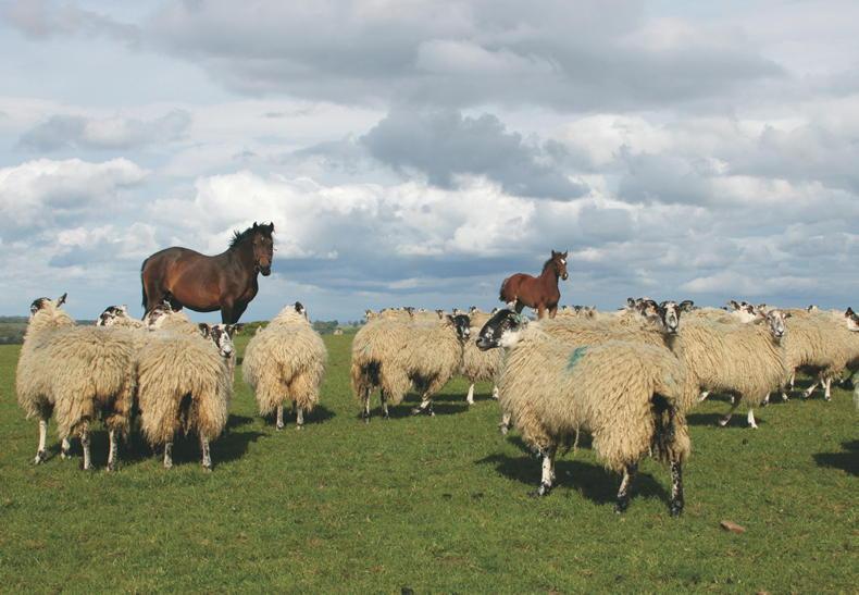 HORSE SENSE: Maximising pasture in the equine diet