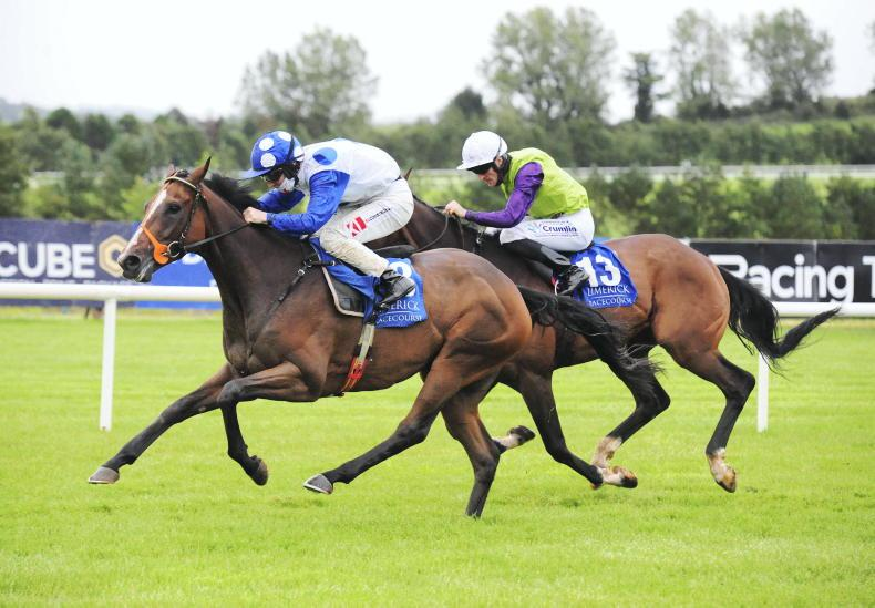 LIMERICK SATURDAY: Back Blackpoint to go well again at Limerick