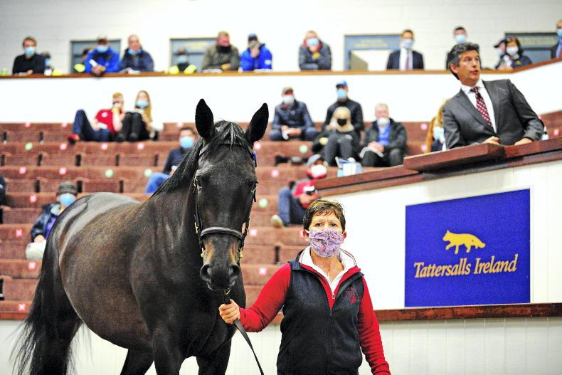 SALES: Signs all good ahead of Derby Sale