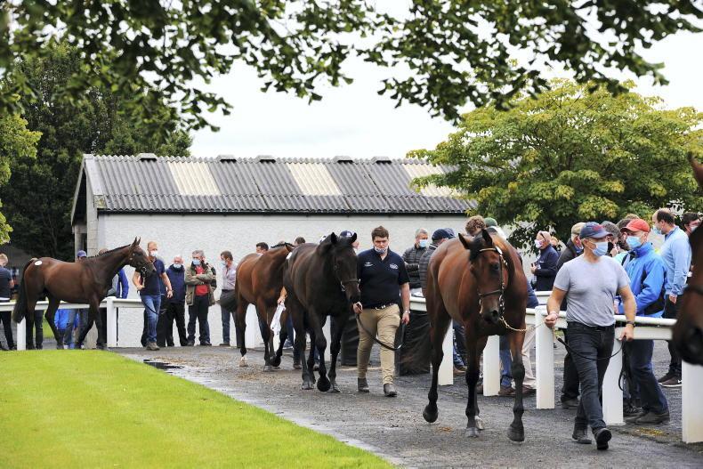 NEWS: Curragh and Derby Sale avoid Covid clampdown
