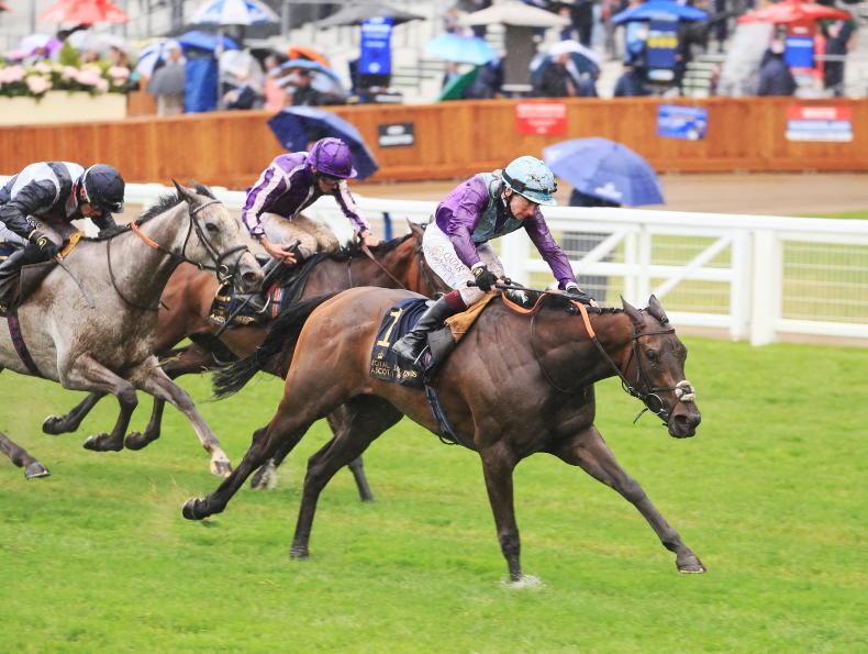 ROYAL ASCOT FRIDAY: Redemption for Murphy on Alcohol Free