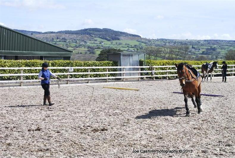 HORSE SENSE: From the ground up - starting youngsters off on the right foot