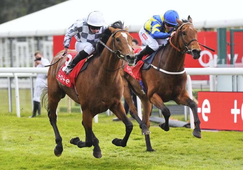 BRITISH PREVIEW:  Note this under-rated colt at double figure odds