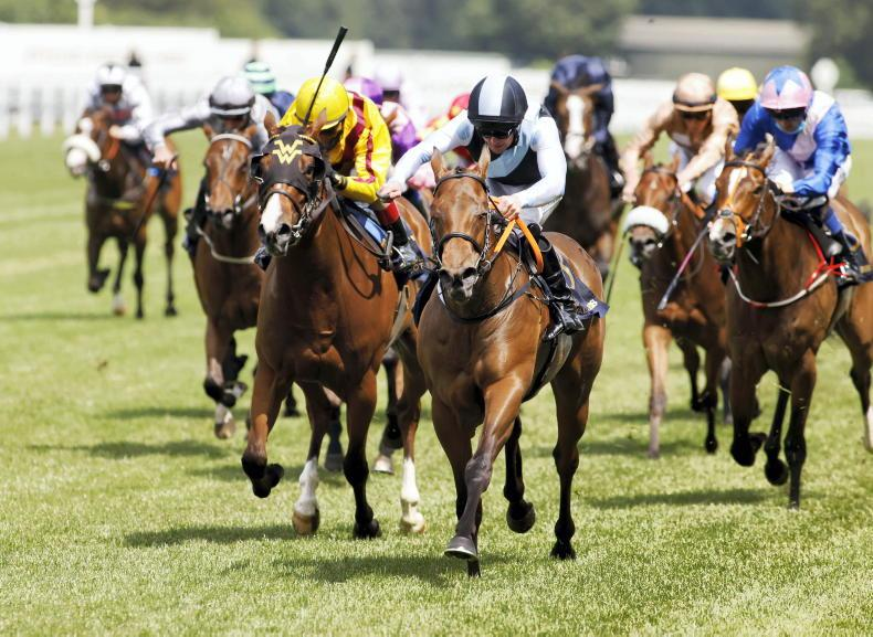 Cheveley Park then Breeders' Cup the plan for Quick Suzy