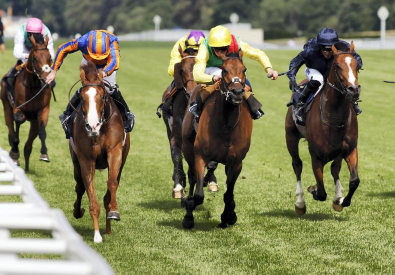 Love and Audarya may head for rematch at Goodwood
