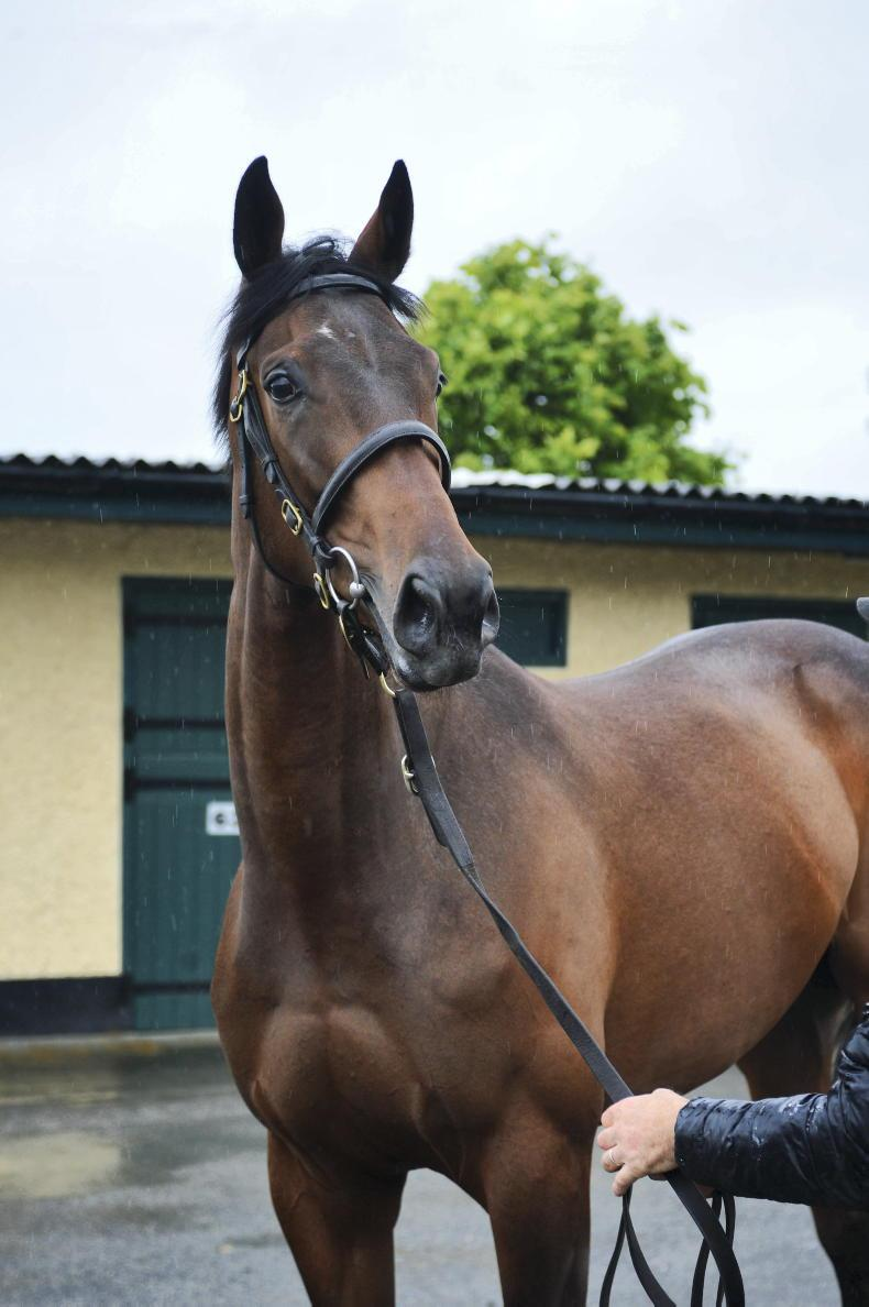 TATTERSALLS DERBY SALE: Leary and Bective Stud take top lot