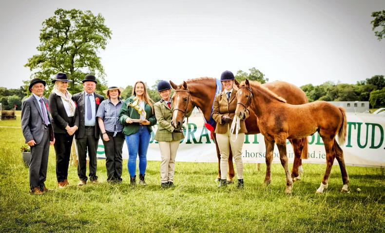 AROUND THE COUNTRY: Irish Draught showcase to go ahead at Stradbally