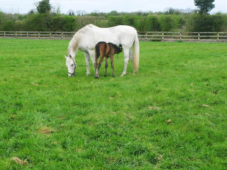 HORSE SENSE: Do you know what's in your grass?