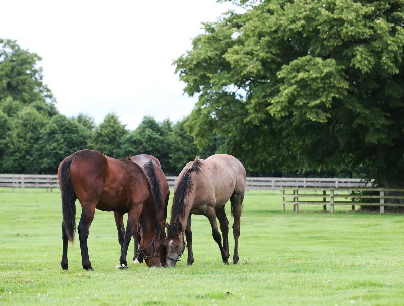 HORSE SENSE: Golden rules for the field-kept horse