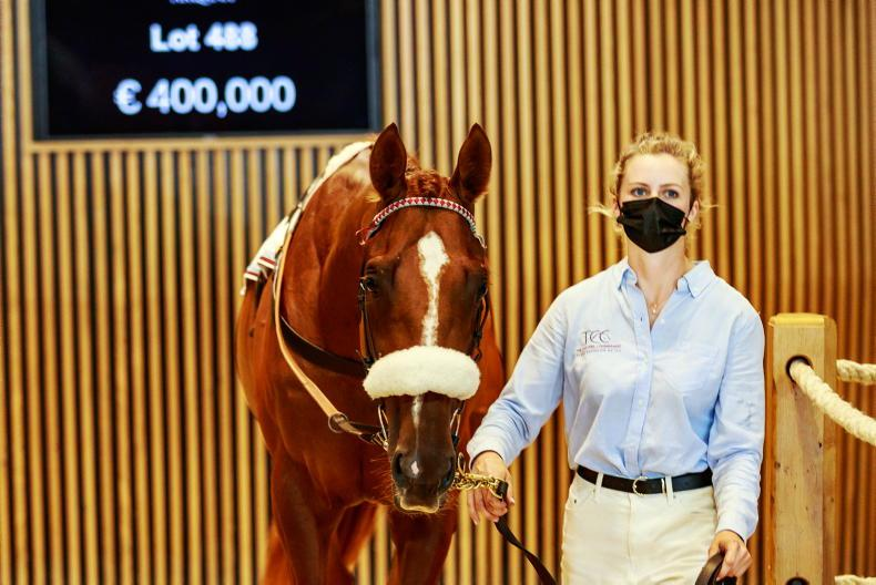ARQANA SUMMER SALE: Record turnover at biggest Summer Sale
