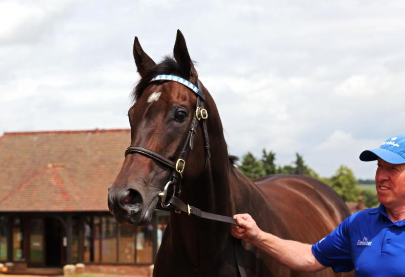 TATTERSALLS JULY SALE: Buoyant sales momentum continues at Newmarket