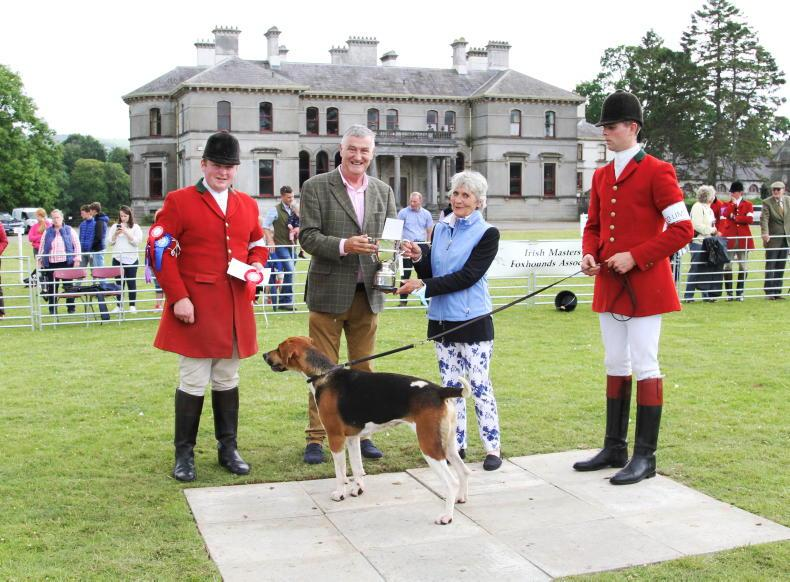 NATIONAL HOUND SHOW: Champions galore at Stradbally