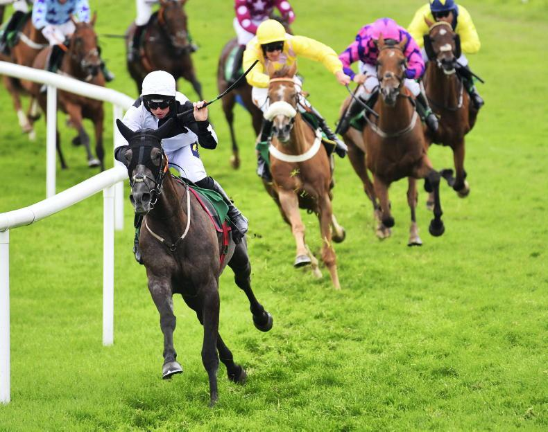DOWNPATRICK TUESDAY: Gris Majeur stars in Foster treble