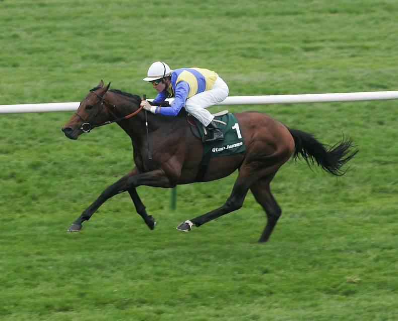 SIRE REVIEW: Shirocco siring winners in both codes