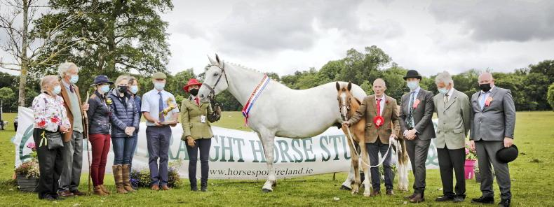 AROUND THE COUNTRY: Record entry for IDHBA Laois showcase