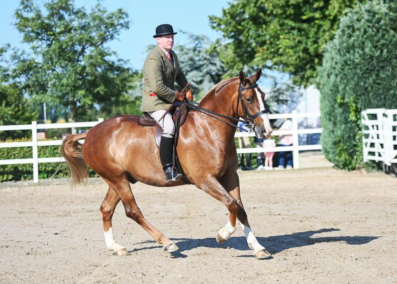 AROUND THE COUNTRY: Fun and games at Wicklow Hunt Summer Show
