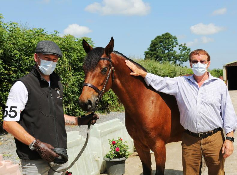BREEDING: CPBS filly showcase takes off