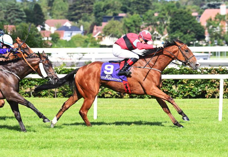 GOWRAN PARK PREVIEW: Mulvany's Red can show them a clean pair of heels