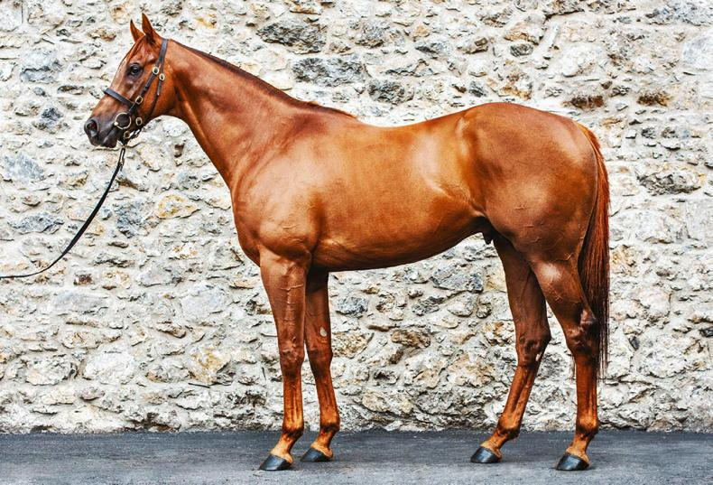 BREEDING INSIGHTS: The first-season sires who are making waves