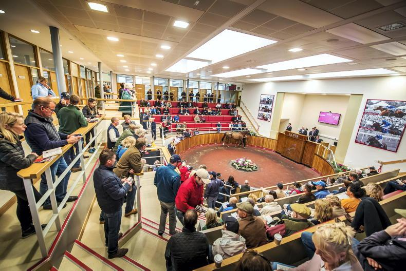 SALES: Is there a Cheltenham Festival winner lurking in August Sale?