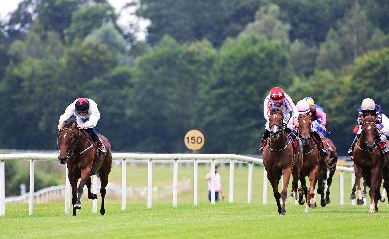 GOWRAN PARK SATURDAY: Debutante date for Murtagh's Meas after smooth win