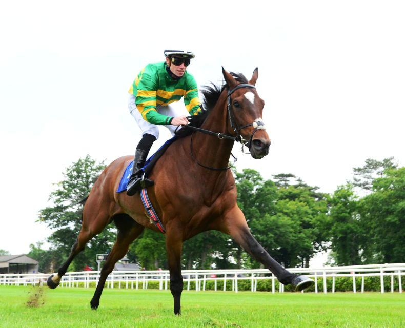 GALWAY THURSDAY TIPS: Green and gold for the Hurdle - but which one?