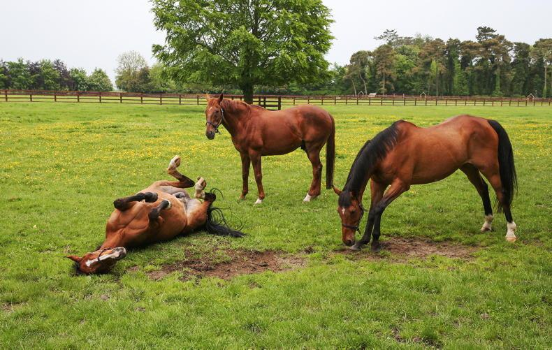 HORSE SENSE: Euthanasia and slaughter of equines - a mistake to conflate the two