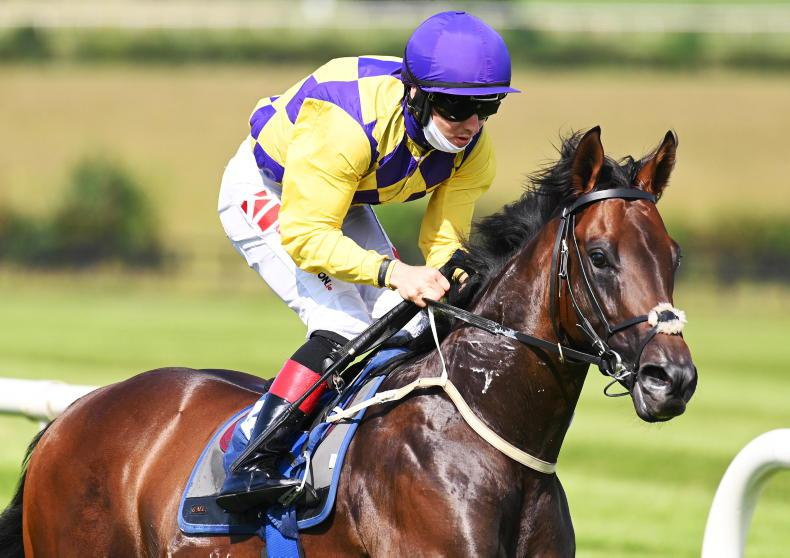 NEWS: Five British-trained juveniles in Naas feature
