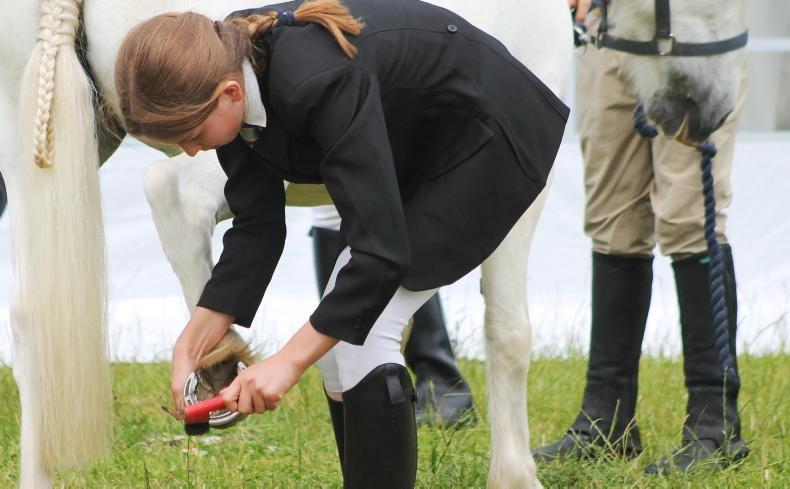 HORSE SENSE: Top tips to pass your Pony Club test with flying colours