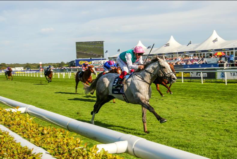 BREEDING INSIGHTS: Frankel's son a boost for British jumping