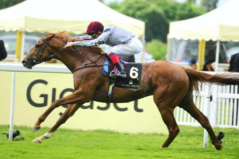 BARGAIN OF THE WEEK: Oscula's group race breakthrough for sire and trainer